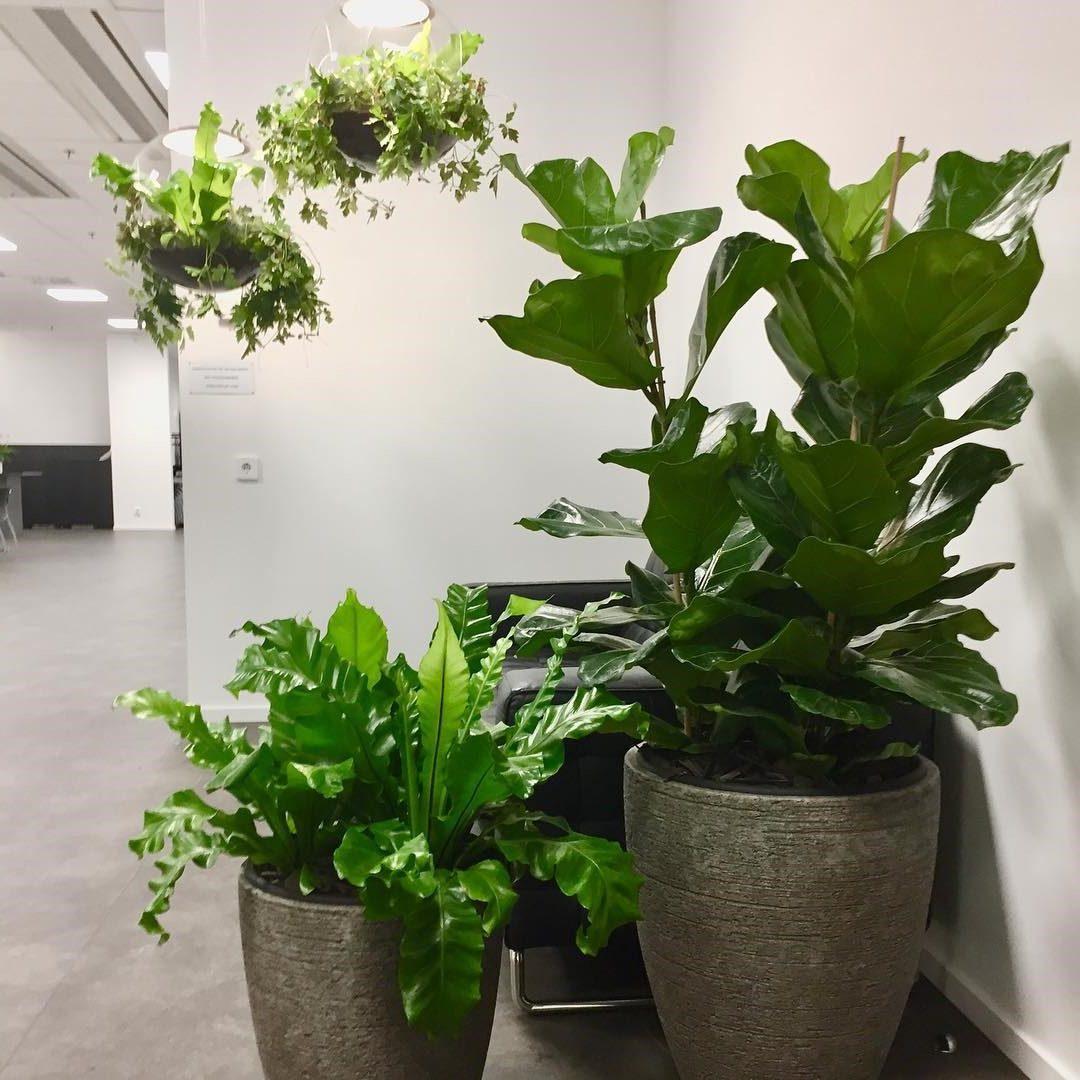 Växter hemsida